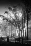 Den dimmiga natten parkerar in Fotografering för Bildbyråer