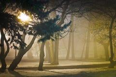Den dimmiga natten parkerar in Royaltyfri Fotografi
