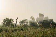 Den dimmiga ottan med soluppgång på djungeln med gömma i handflatan och frodigt gräs i Gambia, Västafrika royaltyfri bild