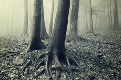 den dimmiga skogen rotar treestammar Royaltyfria Foton