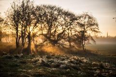 Den dimmiga solnedgången över Sefton parkerar Arkivfoto