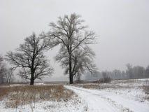 Den dimmiga vintern landskap Arkivfoton