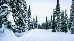 Den djup snöpacken och snö täckte träd på den alpina byn av solmaxima Arkivbild