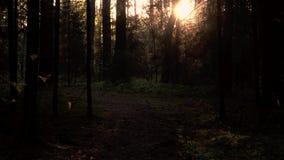 Den djupa skogen gillar saga i morgonen lager videofilmer