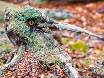 Den djupa skogen rotar felika långa näsmardrömmen som den är Arkivfoto