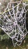 Den djupfrysta spindeln förtjänar i vintertiden Arkivbild