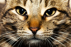 Den djura älsklings- katten Royaltyfri Fotografi