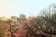 Den drömlika plommonet blomstrar med den japanska slotten i bakgrund royaltyfria bilder