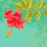 Hibiskusblomma på tonad bakgrund Fotografering för Bildbyråer