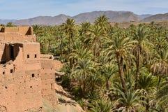 Den Draa dalen, gömma i handflatan kolonier, Marocko royaltyfri fotografi