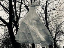 Den Dracula's brudklänningen royaltyfri fotografi