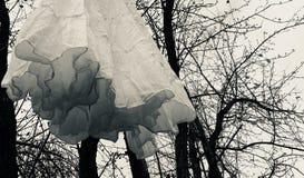 Den Dracula's brudklänningen royaltyfria bilder