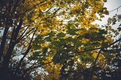 Den dramatiska känslosamma och romantiska hösten färgar bakgrund Royaltyfri Fotografi