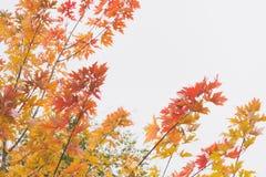 Den dramatiska känslosamma och romantiska hösten färgar bakgrund Fotografering för Bildbyråer