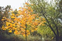 Den dramatiska känslosamma och romantiska hösten färgar bakgrund Arkivfoton