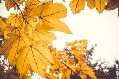 Den dramatiska känslosamma och romantiska hösten färgar bakgrund Royaltyfri Foto