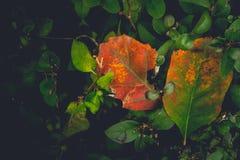 Den dramatiska känslosamma och romantiska hösten färgar bakgrund Arkivbild