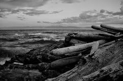 Den dramatiska platsen av drivvedjournaler, vaggar, och att krascha vinkar längs kusten av Juan de Fuca Strait i svartvitt royaltyfri bild