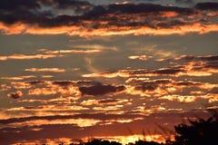 Den dramatiska solnedgången i havrefältet precis efter solen går ner Arkivbild