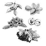 Den drawngraphic fastställda handen skissar med bär och sidor på isolerad vit bakgrund stock illustrationer