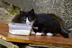 den dricka kattungen mjölkar Arkivbilder