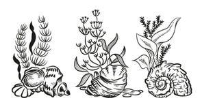 Den drog handen för havsskalalger skissar isolerad nolla för stil illustrationen Fotografering för Bildbyråer