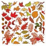 Den drog handen förgrena sig och sidor av träd för den tempererade skogen Hösten färgade den blom- uppsättningen som isolerades p Royaltyfria Bilder