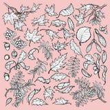 Den drog handen förgrena sig och sidor av träd för den tempererade skogen Svartvitt skissa stiluppsättningen som isoleras på rosa Arkivbilder