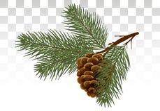 Den drog handen sörjer kotte- och granträdet Botanisk dragen vektorillust royaltyfri illustrationer
