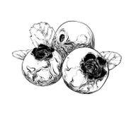 Den drog handen skissar av blåbäret i svart bakgrund isolerad white Dra för affischer, garnering och tryck vektor royaltyfri illustrationer