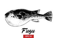 Den drog handen skissar av fugufisken i svart som isoleras på vit bakgrund Detaljerad teckning för tappningetsningstil royaltyfri illustrationer