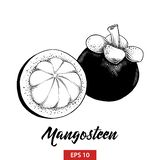 Den drog handen skissar av mangosteenfrukt i svart som isoleras på vit bakgrund Detaljerad teckning för tappningetsningstil royaltyfri illustrationer