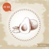 Den drog handen skissar sammansättning för avokadofrukter Halv avokado för hel anf Royaltyfri Fotografi
