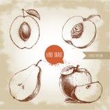 Den drog handen skissar stilfruktuppsättningen Aprikos persika som är halv med bladet, halvt päron, äpplesammansättning Illustrat Royaltyfria Bilder