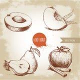 Den drog handen skissar stilfruktuppsättningen Aprikos persikafjärdedel med blad, hel päron och halvt, äpple med kanel Fotografering för Bildbyråer