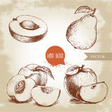 Den drog handen skissar stilfruktuppsättningen Halv aprikos, persikor, helt päron, äpplen Illustration för Eco matvektor Arkivbild