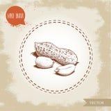 Den drog handen skissar stiljordnötgruppen Grillat eller ny frö och jordnötfröskida som isoleras på gammal seende bakgrund Organi vektor illustrationer