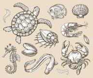 Den drog handen skissar uppsättningen av skaldjur, havsdjur också vektor för coreldrawillustration royaltyfri illustrationer