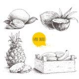 Den drog handen skissar uppsättningen för tropiska frukter för stil som isoleras på vit bakgrund Bananer i träask, kokosnötter, a Arkivbilder