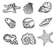 Den drog havsskalhanden skissar stilillustrationen som isoleras på whit Royaltyfri Bild