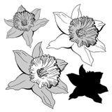 Den drog realistiska handen skissar med blommapåskliljor som isoleras på vit royaltyfria bilder