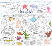 Den drog stora handen för djur för havsliv skissar uppsättningen klotter av fisken, haj, bläckfisk, stjärna, krabba, val, sköldpa Arkivbild