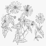 Den drog uppsättningen av handen blommar på vit bakgrund Royaltyfri Foto
