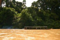 In den Dschungel Stockbilder