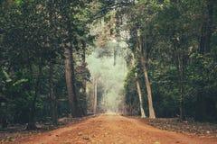 In den Dschungel Lizenzfreie Stockfotos