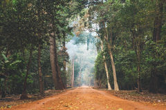 In den Dschungel Lizenzfreies Stockfoto