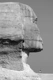 Den egyptiska turisten övervakar på kamelvakter sfinxen Royaltyfri Fotografi