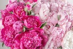 Den eleganta buketten av många pioner av rosa färger färgar tätt upp Härlig blomma för någon ferie Massor av nätt och arkivfoton