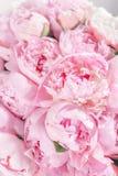 Den eleganta buketten av många pioner av rosa färger färgar tätt upp Härlig blomma för någon ferie Massor av nätt och fotografering för bildbyråer