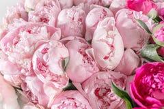 Den eleganta buketten av många pioner av rosa färger färgar tätt upp Härlig blomma för någon ferie Massor av nätt och arkivfoto